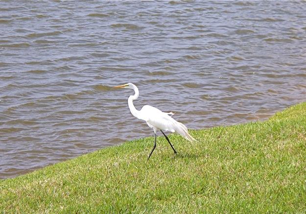 crane walking